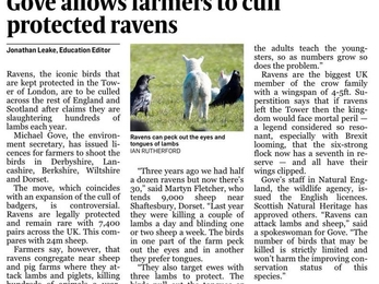 Natural England issuing licences to farmers to cull ravens.