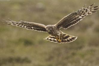 Birds Of Prey Derbyshire Wildlife Trust