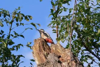 Woodpecker at The Avenue Washlands, Stewart Abbott