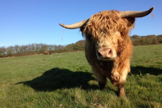Highland cattle at Woodside Farm, Jon Preston