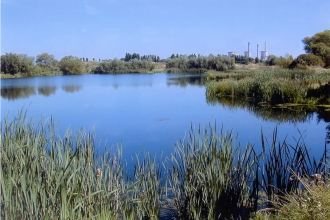 Willington Gravel Pits, Derbyshire Wildlife Trust
