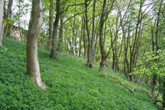 Cramside Wood, Derbyshire Wildlife Trust