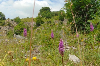 Orchids at Chee Dale, Julia Gow