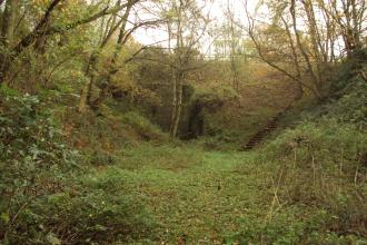 Duckmanton Railway Cutting, Derbyshire Wildlife Trust