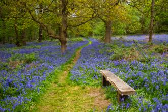 Spring Wood in bluebells, Tony Frankland