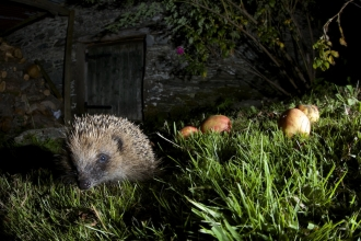 Hedgehog, Richard Bowler