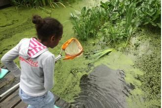 Pond dipping, Emma Websdale