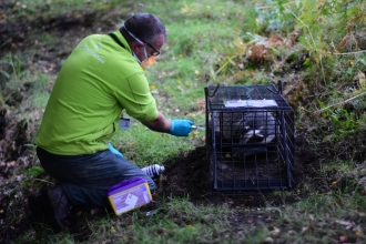 Jason Skeen vaccinating the 200th badger of the season - Georgie Hutton, High Peak Badger Group