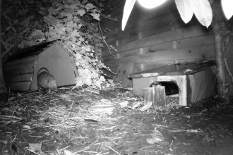 Hedgehog in Somercotes