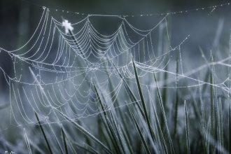 Spiders Web on Frosted Grass