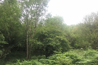 Thornhill Nature Reserve