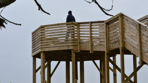 Viewing platform at Woodside Farm, Gavin Henderson