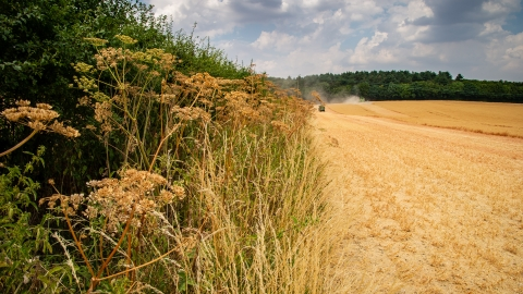 Jordans Farm Partnership Oat harvest  © Matthew Roberts