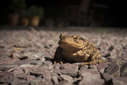 Toad, Neil Shaw, via Flickr