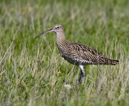 Curlew, Damien Waters