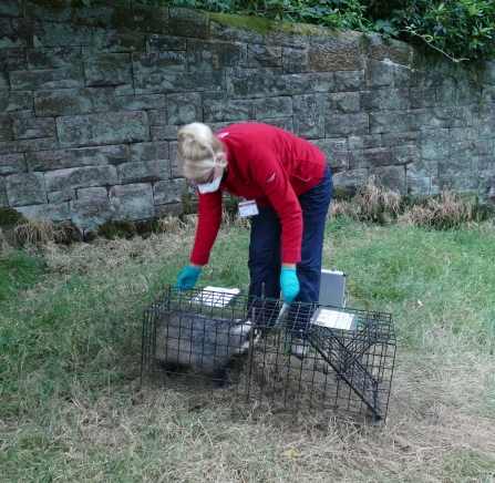 Badger vaccination Gail Weatherhead July 18