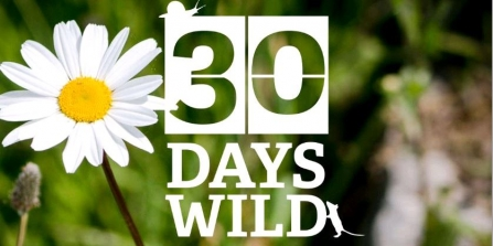 30 Days Wild challenge reaches new record! Over 400,000 people ...