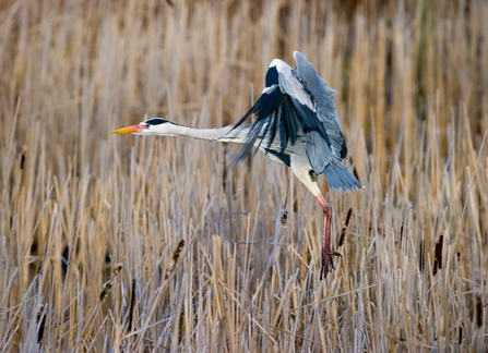 Heron by David Tipling 2020VISION.JPG