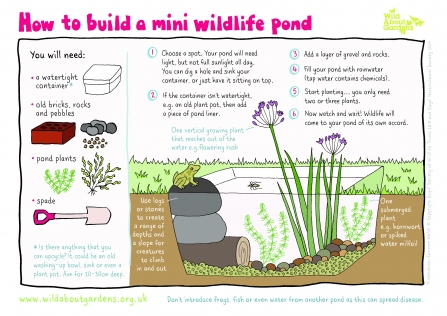 mini wildlife pond