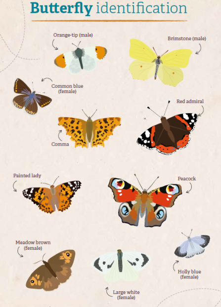 Butterfly ID guide